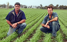 Consistent Yields Achieved at Narrabri